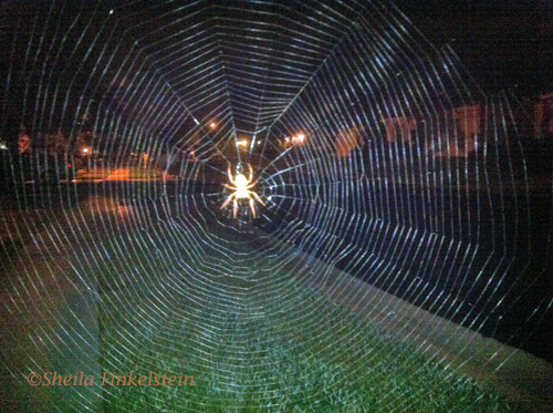 Spider web with many paths leading out and back to the center
