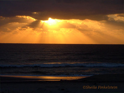 from the lens - golden sunrise in Delray Beach