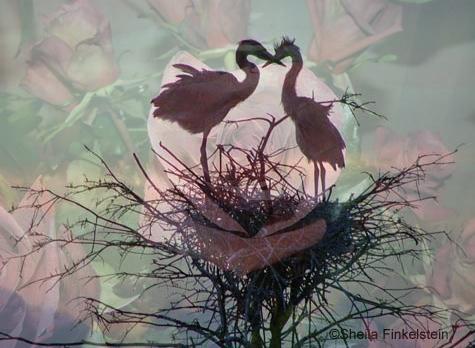 heartbirds-onroses-475