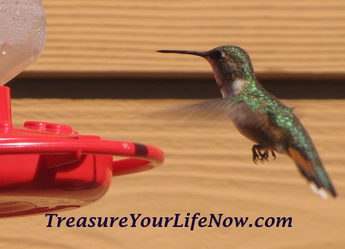 Hummingbird at Feeder in Colorado as seen in http://TreasureYourLIfeNow.com