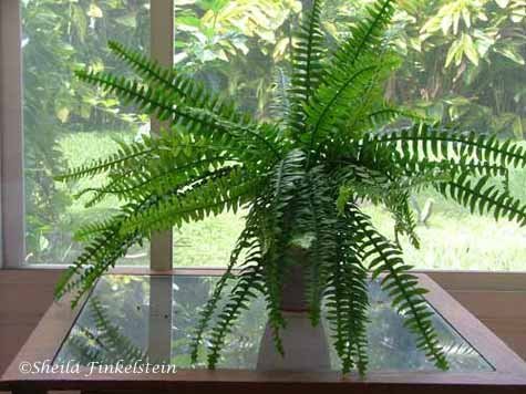 Artificial, plastic ferns on a table on http://TreasureYourLifeNow.com