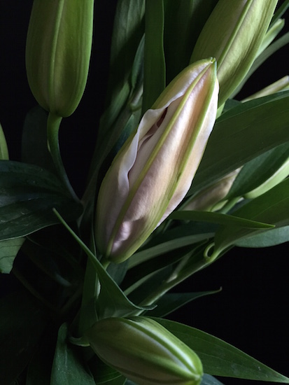 http://Treasureyourlifenow.com - Candy stripe lily bud long