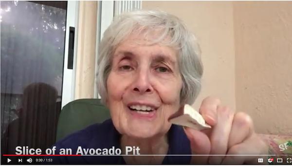 Sheila Finkelstein hold a rock-hard slice of an avocado pit