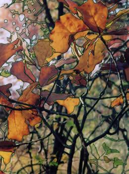 Orange Autumn leaves - Photo/drawing