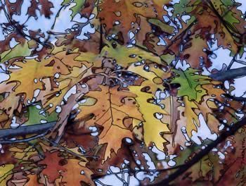 Photo/Drawing of yellow and brown autumn leaves