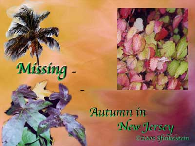 Autumn Leaves Collage - Missing Autumn in New Jersey